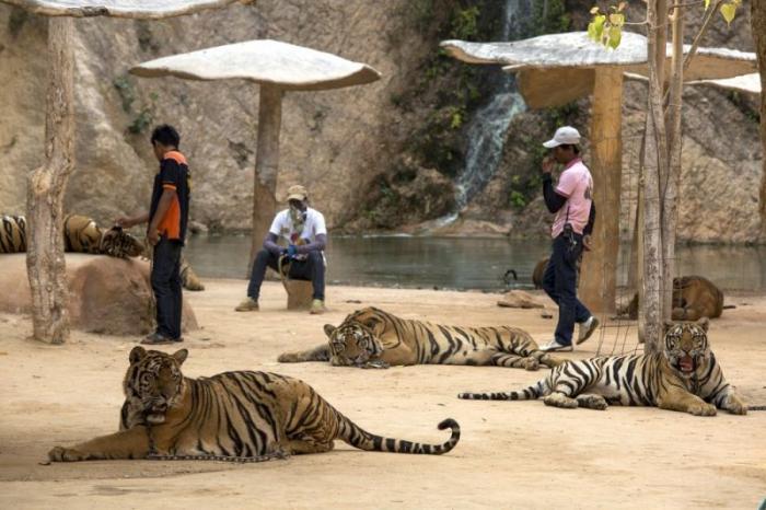 Храм Тигра в буддийском монастыре (19 фото)