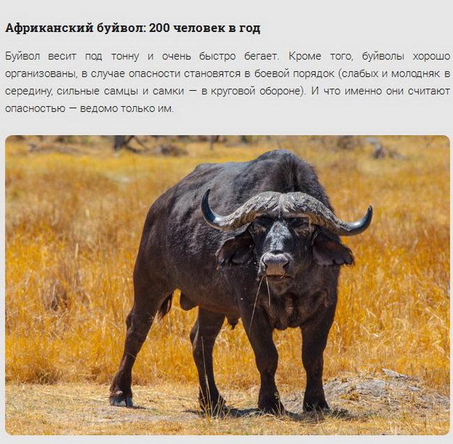 Животные-убийцы людей (16 фото)