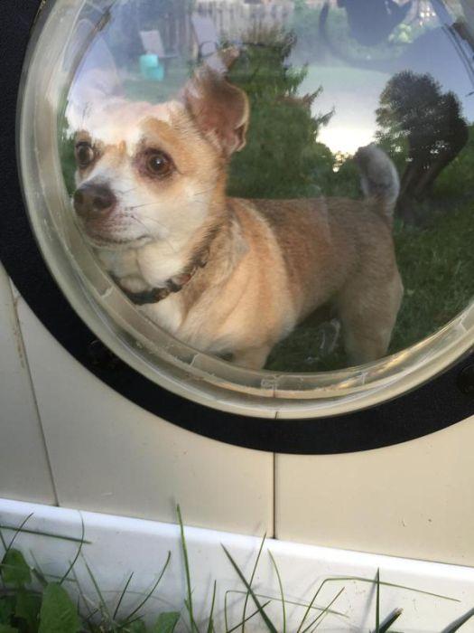 Иллюминаторы для собак (9 фото)