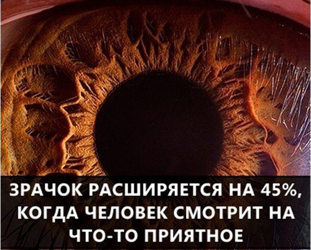 Подборка интересных и познавательных фактов (54 фото)