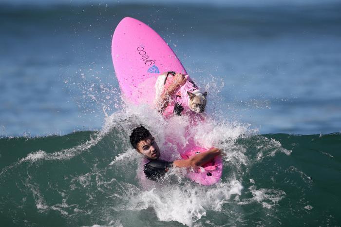 Соревнования по собачьему серфингу в Калифорнии (19 фото)