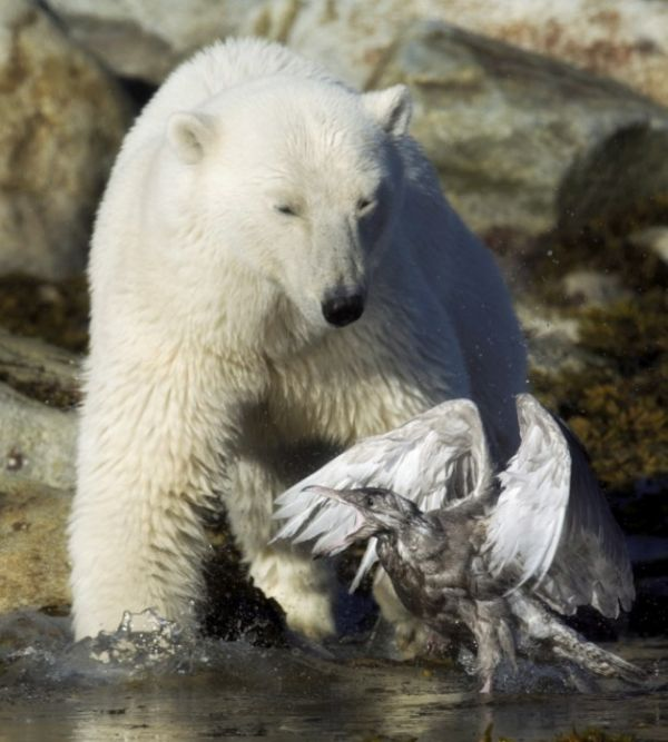 1475182394 01 The bear and bird (9 photos)