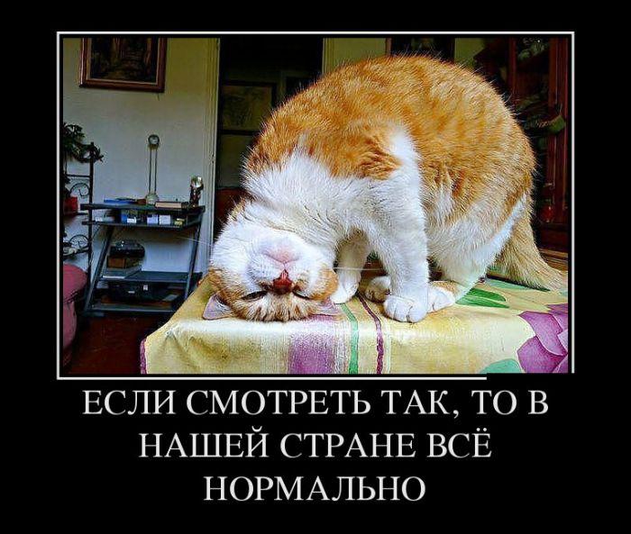 1477341806_16.jpg