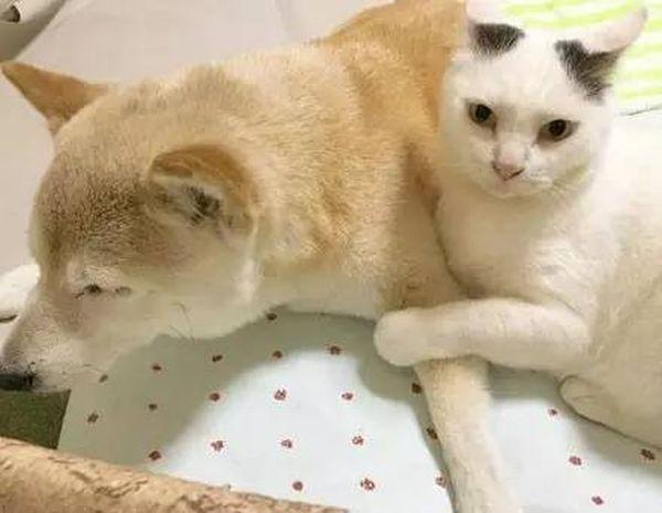 кот и пес приколы