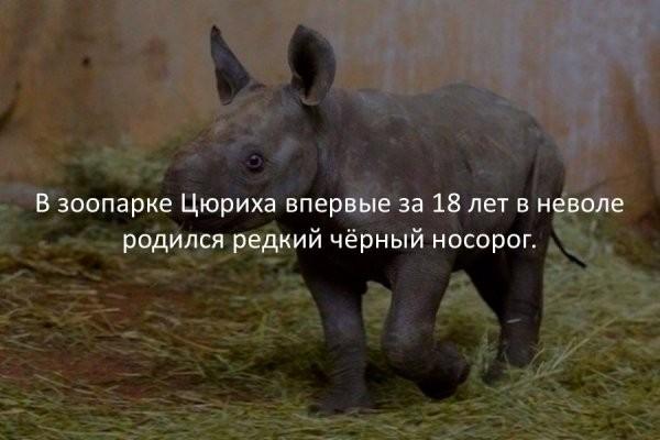 Интересные факты (39 фото)