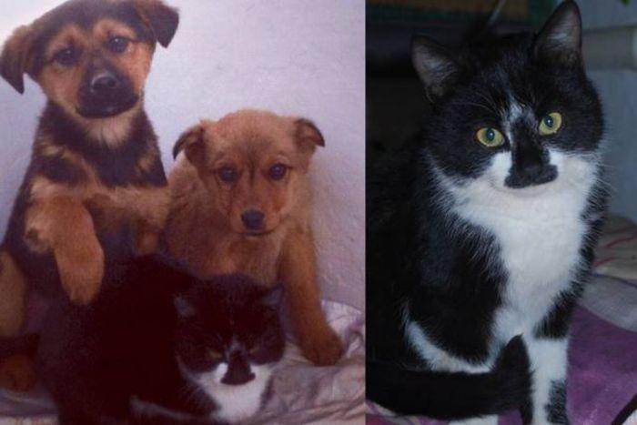 Кошка спасла щенков от голодной смерти (2 фото)