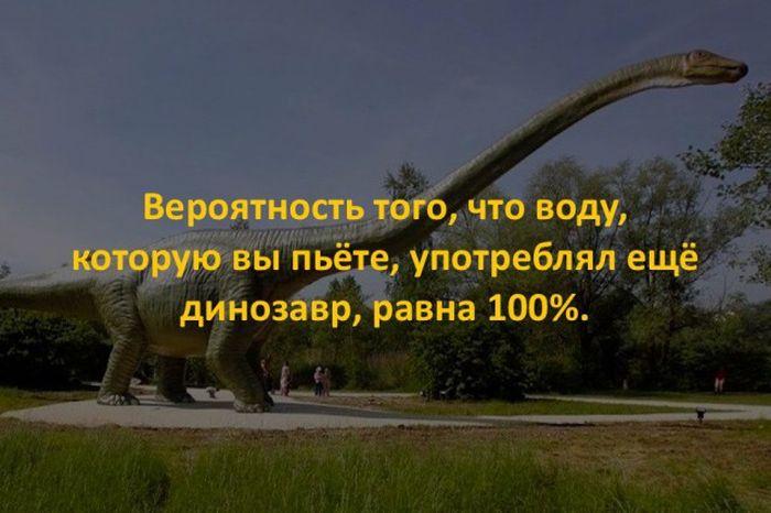 Интересные факты для любознательных (43 фото)