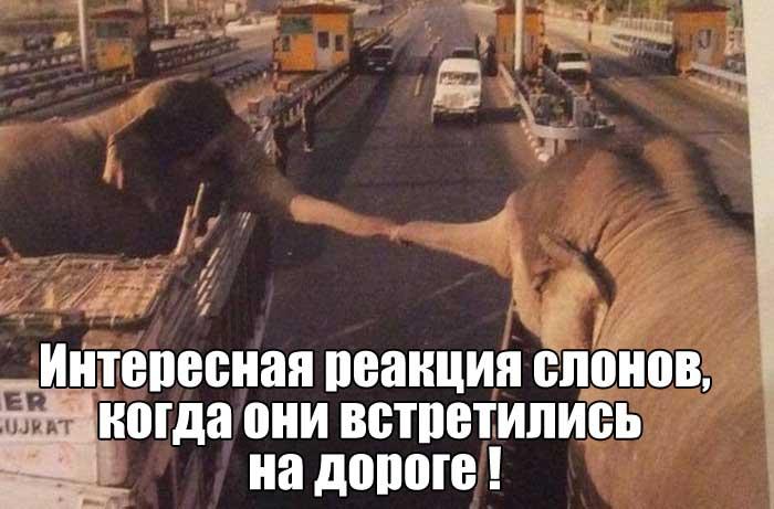 Подборка прикольных фото №1532 (104 фото)