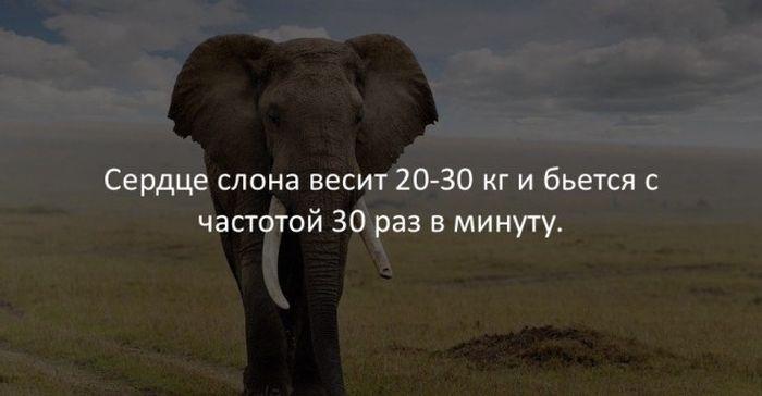 Интересные факты (40 фото)