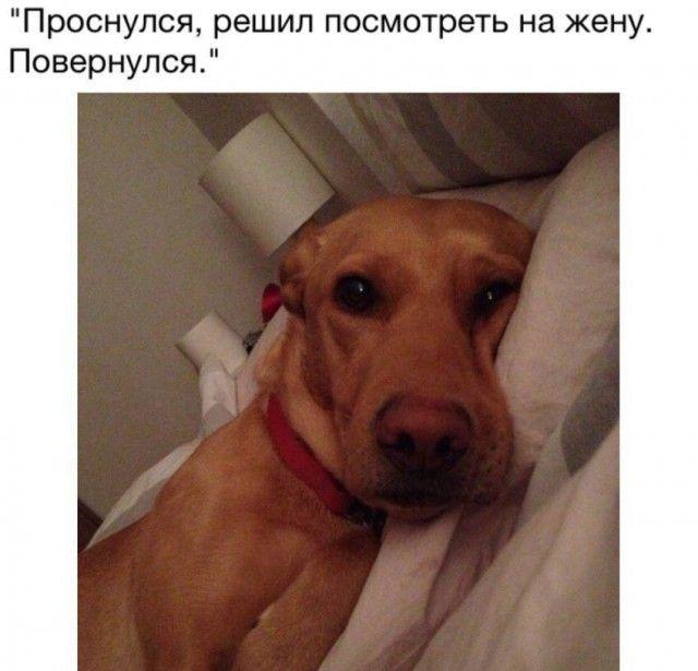 Подборка прикольных фото №1581 (104 фото)