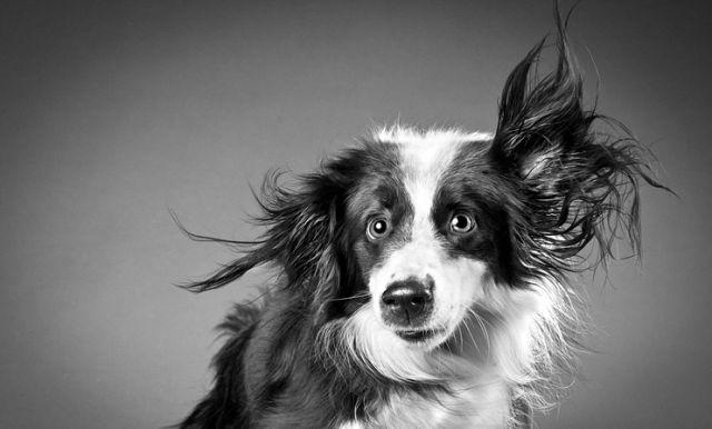 Мордашки псов (16 фото)