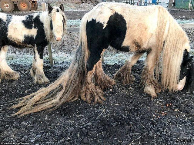 Спасение двух брошенных в поле лошадей (4 фото)