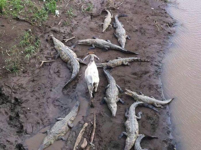 Животные, которые всегда сохраняют безразличие (32 фото)