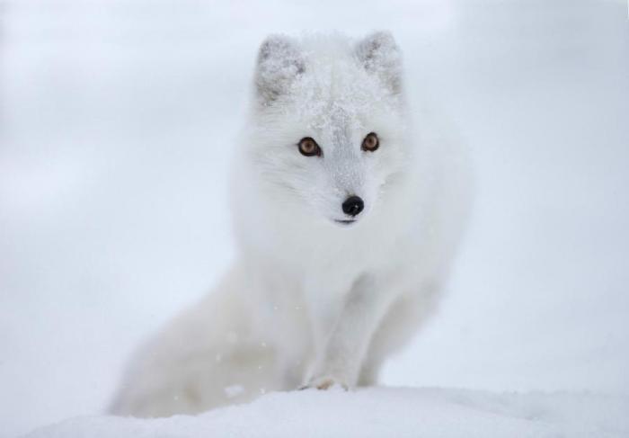 Топ 10 самых красивых животных мира