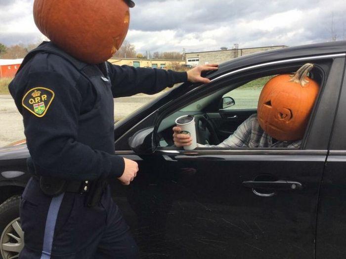 Смешные фотографии из Канады, Часть 2
