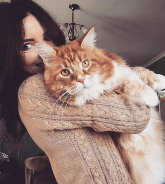 Гигантский кот может попасть в «Книгу рекордов Гиннеса»