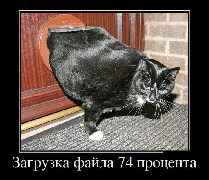 Демотивчики 17