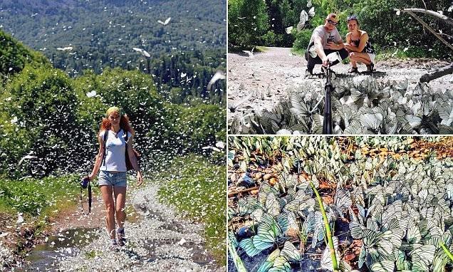 Нашествие бабочек в Сибири (10 фото)