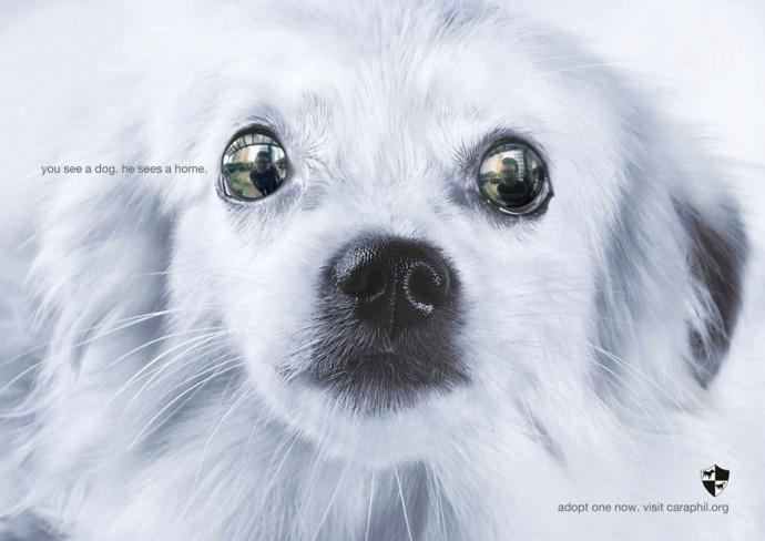 Креативная социальная реклама о животных