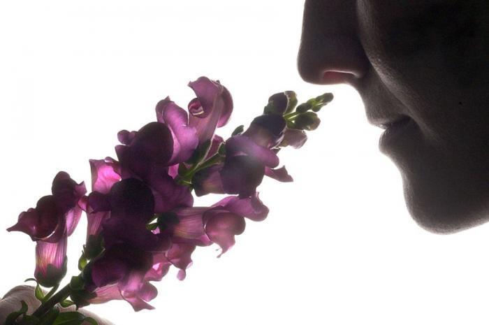 Полезные запахи (10 фото)