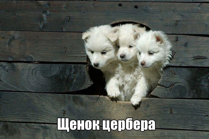 Подборка прикольных фото №1684 (106 фото)