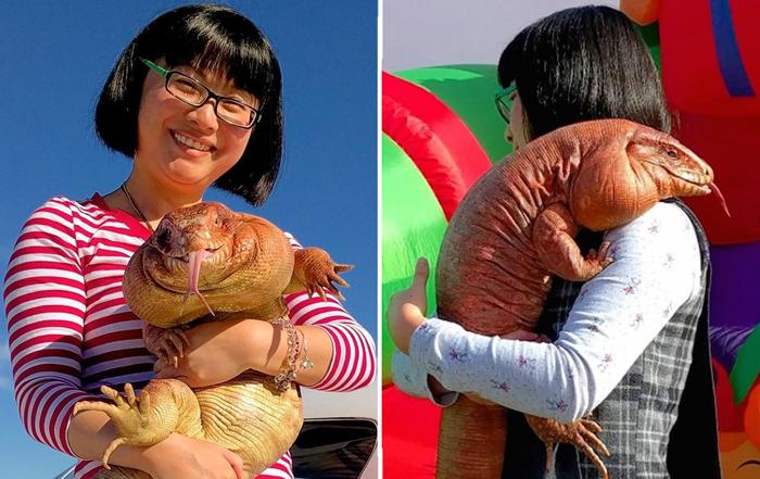Ящерица тегу – забавное домашнее животное (11 фото)