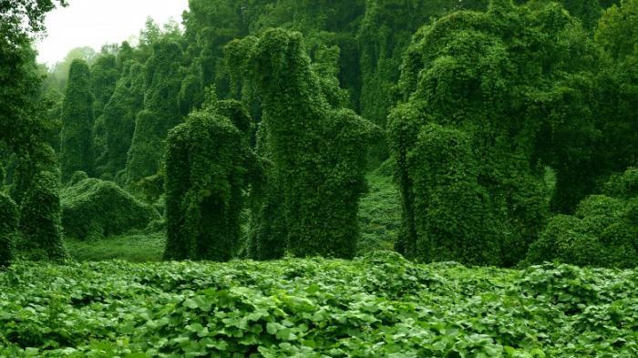 Растения из кошмаров (5 фото)
