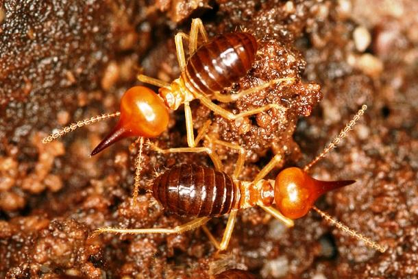 15 занимательных фактов о муравьях (14 фото)