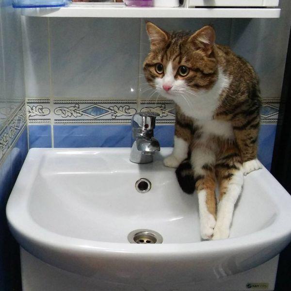 Коты, которые забыли, как нужно правильно сидеть (17 фото)