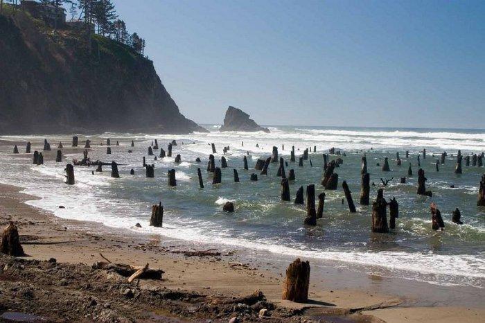 Призрачный лес на тихоокеанском пляже (4 фото)
