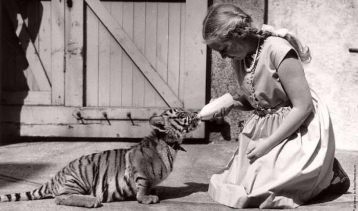 Дружба животных и людей на фотографиях 19 века (36 фото)