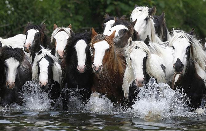 Ярмарка лошадей (16 фото)