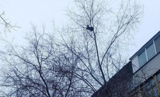 Спасения застрявшего на дереве кота (4 фото)