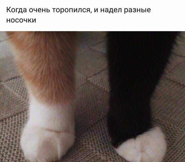 Подборка прикольных фото №1752 (105 фото)