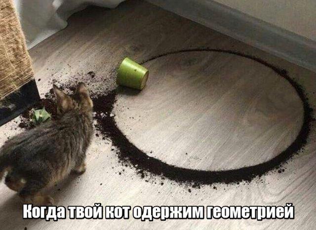 Подборка прикольных фото №1759 (107 фото)
