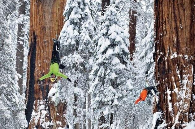Чтобы заснять это дерево целиком, фотографам понадобилось 32 дня (8 фото)