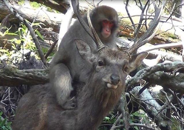 Мир животных (5 фото)