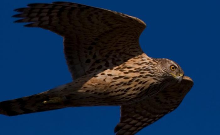 Самые опасные птицы в мире (7 фото)