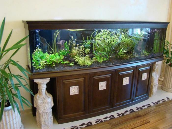 Выбираем аквариум для дома правильно (6 фото)