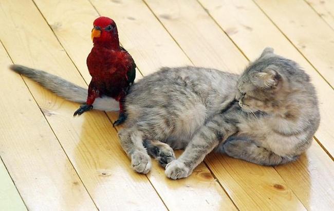 13 животных, доказывающих, что размер не имеет значения (13 фото)