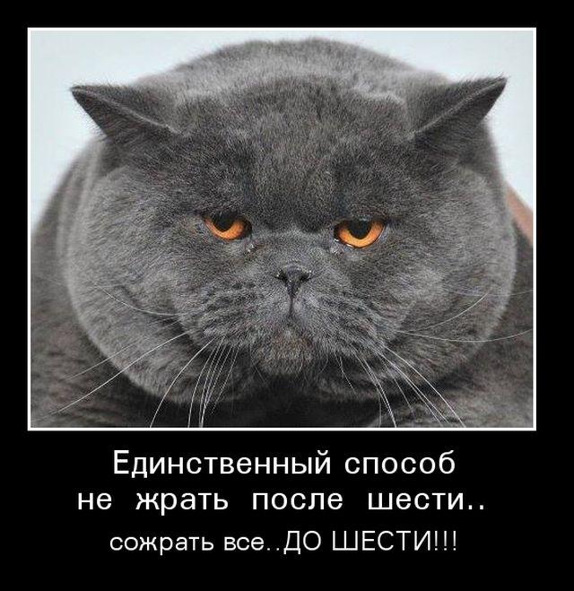 1516217531_029.jpg