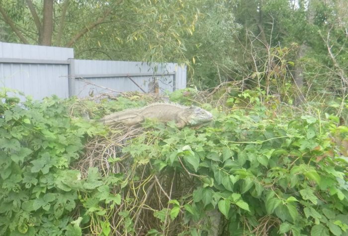 Динозавр поел кабачки (5 фото)
