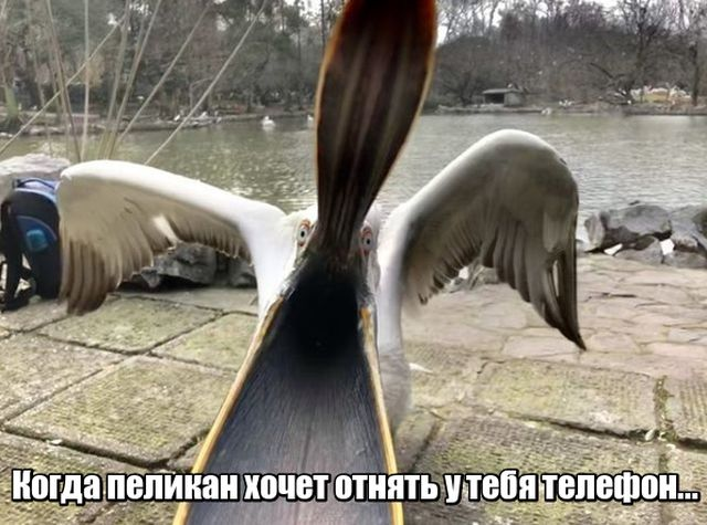 Подборка прикольных фото №1820 (47 фото)