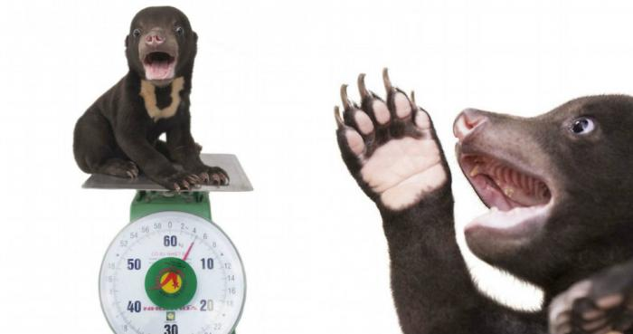 Первая фотосессия самого милого медвежонка в мире (9 фото)