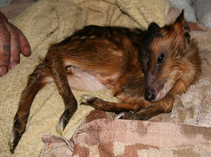 Самая невероятная история спасения животного (3 фото)