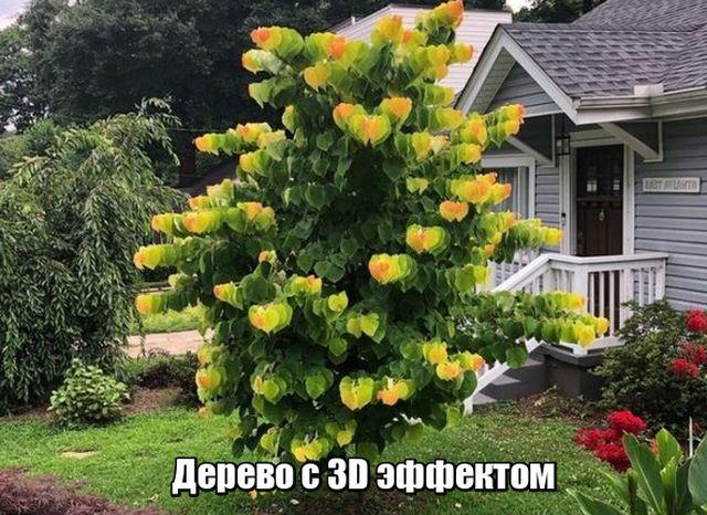 Подборка прикольных фото №1892 (50 фото)