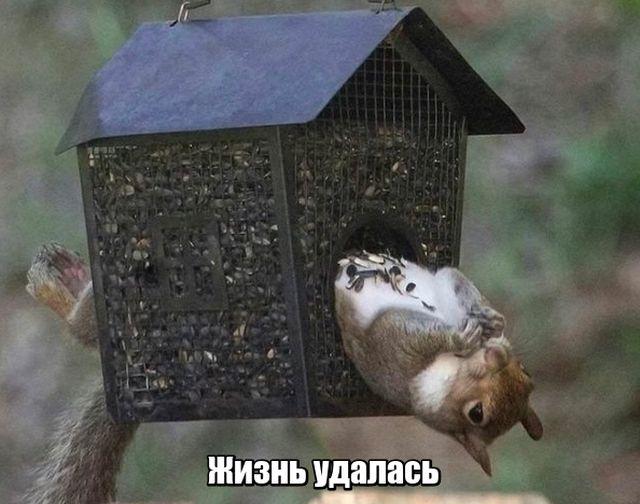 Подборка прикольных фото №1893 (45 фото)