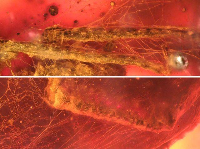 Необычная находка в янтаре (3 фото)
