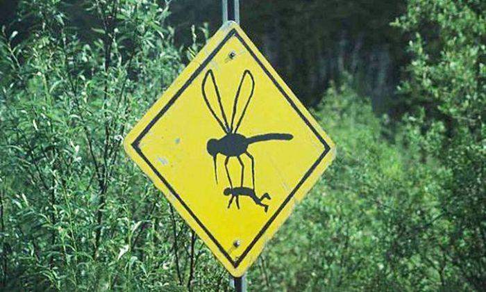 """Что нужно делать, чтобы комар """"не захотел"""" вас кусать (5 фото)"""