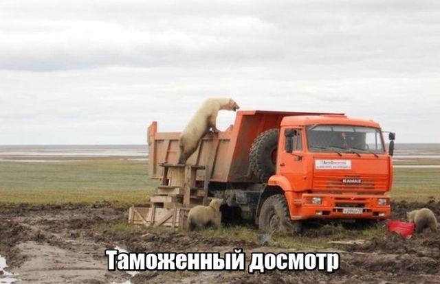 Подборка прикольных фото №1894 (52 фото)
